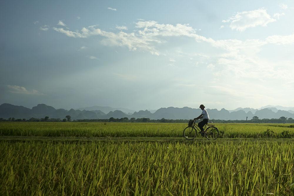 Ảnh đẹp cánh đồng lúa quê
