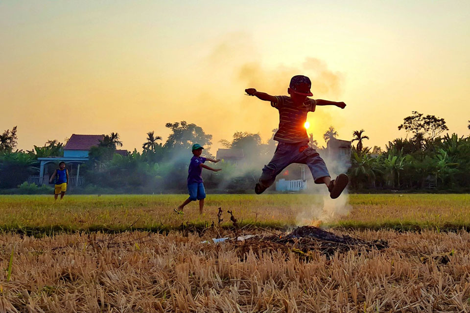 Ảnh đẹp cánh đồng lúa sau mùa gặt