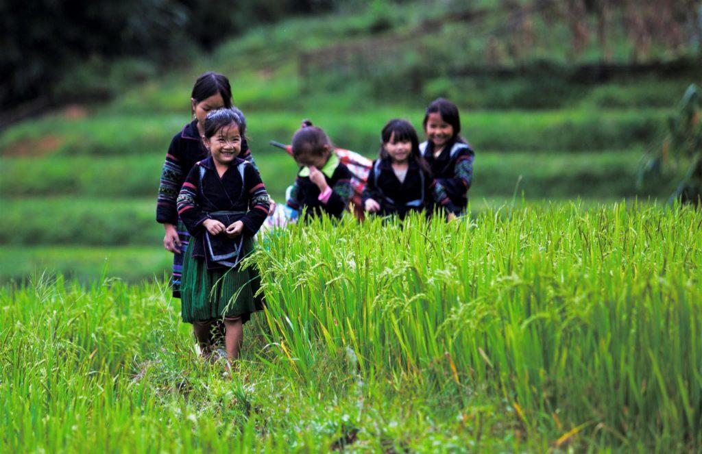 Ảnh đẹp trẻ em đùa vui trên cánh đồng lúa