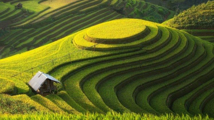 Hình ảnh cánh đồng lúa bậc thang đẹp nhất