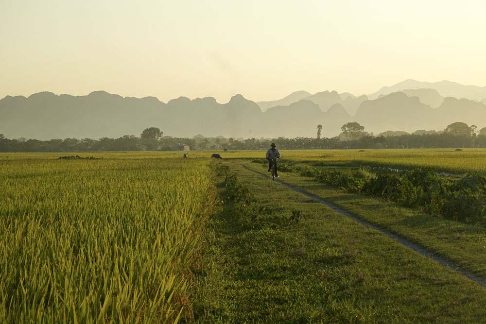 Hình ảnh đẹp cánh đồng lúa chín chiều thu