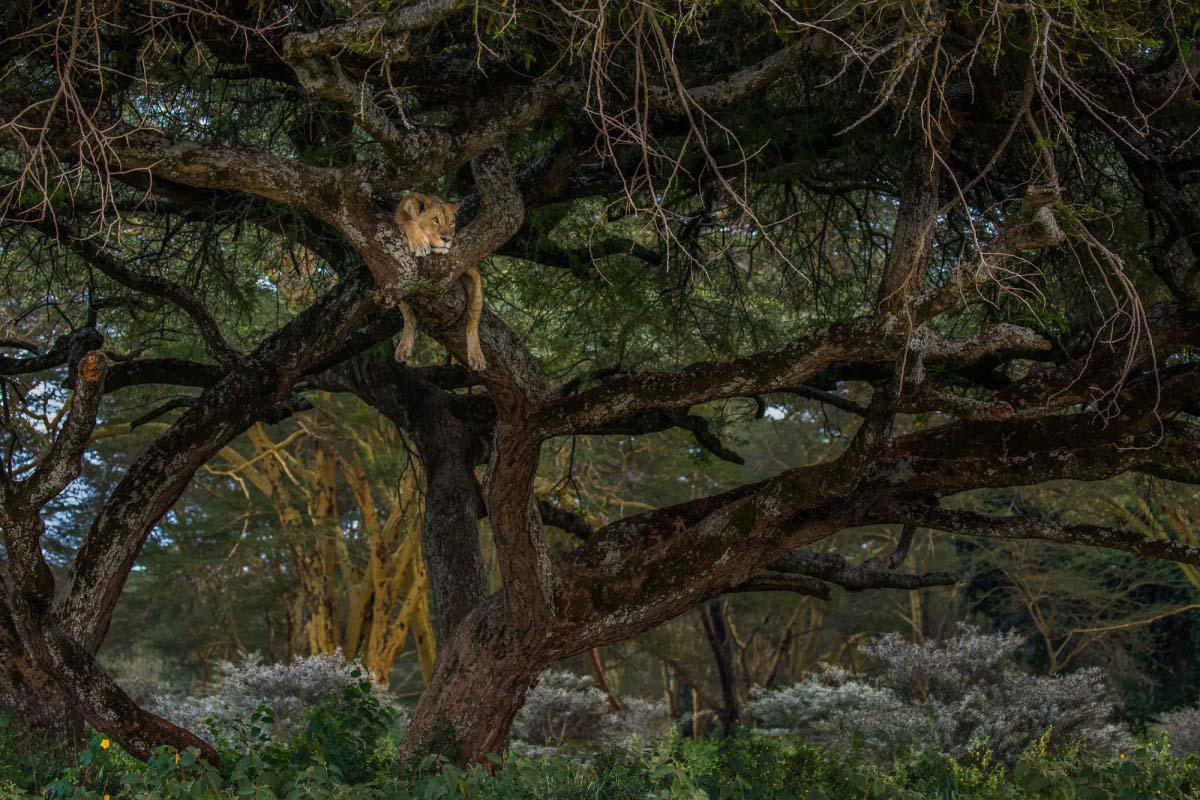 Ảnh đẹp rừng thiên nhiên