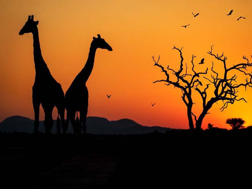 Ảnh đẹp thiên nhiên chiều tối