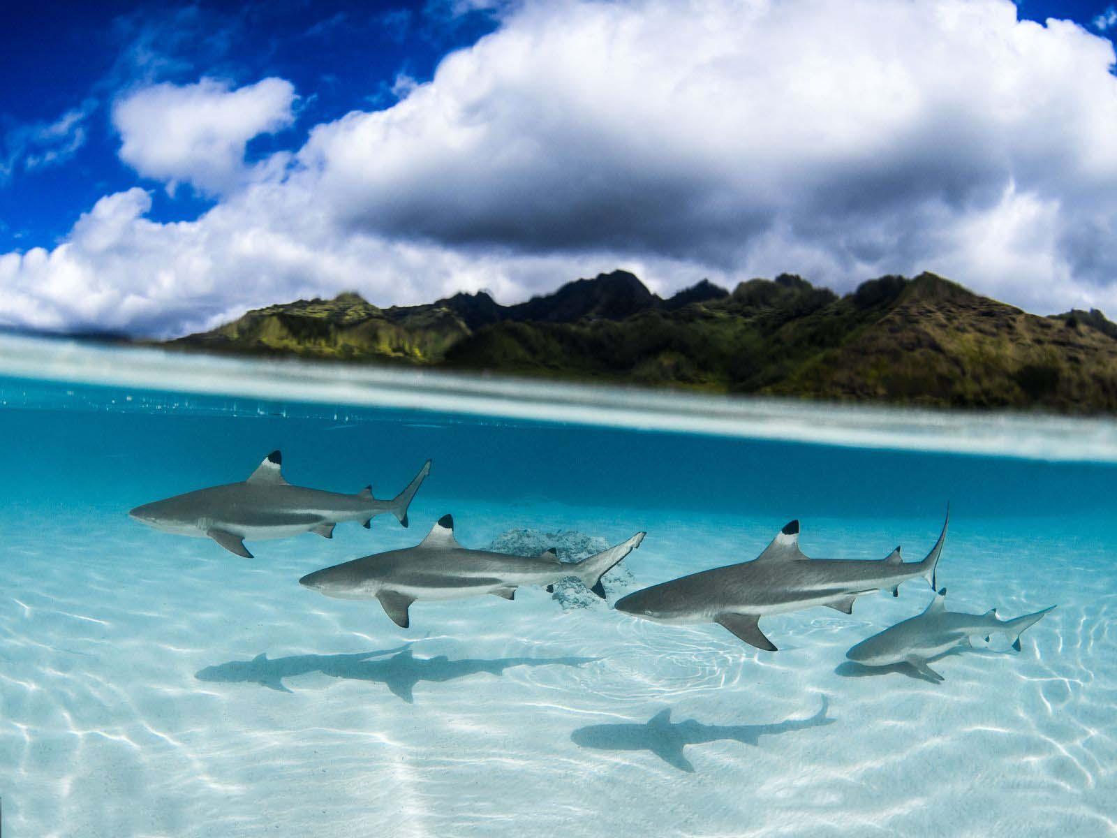 Ảnh đẹp thiên nhiên dưới biển