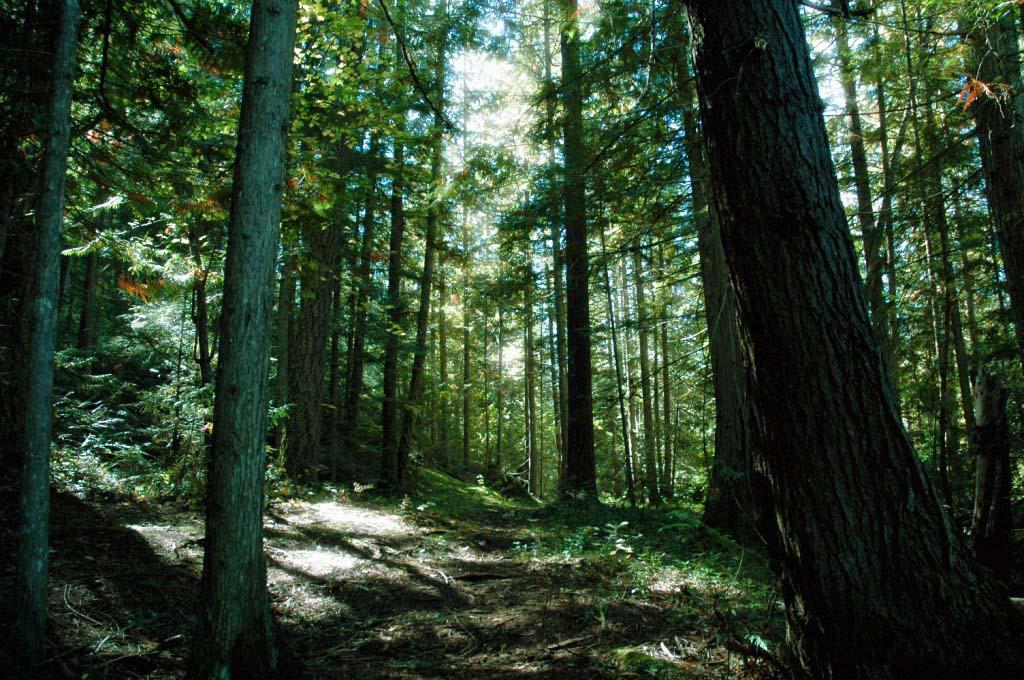 Ảnh đẹp thiên nhiên rừng rậm
