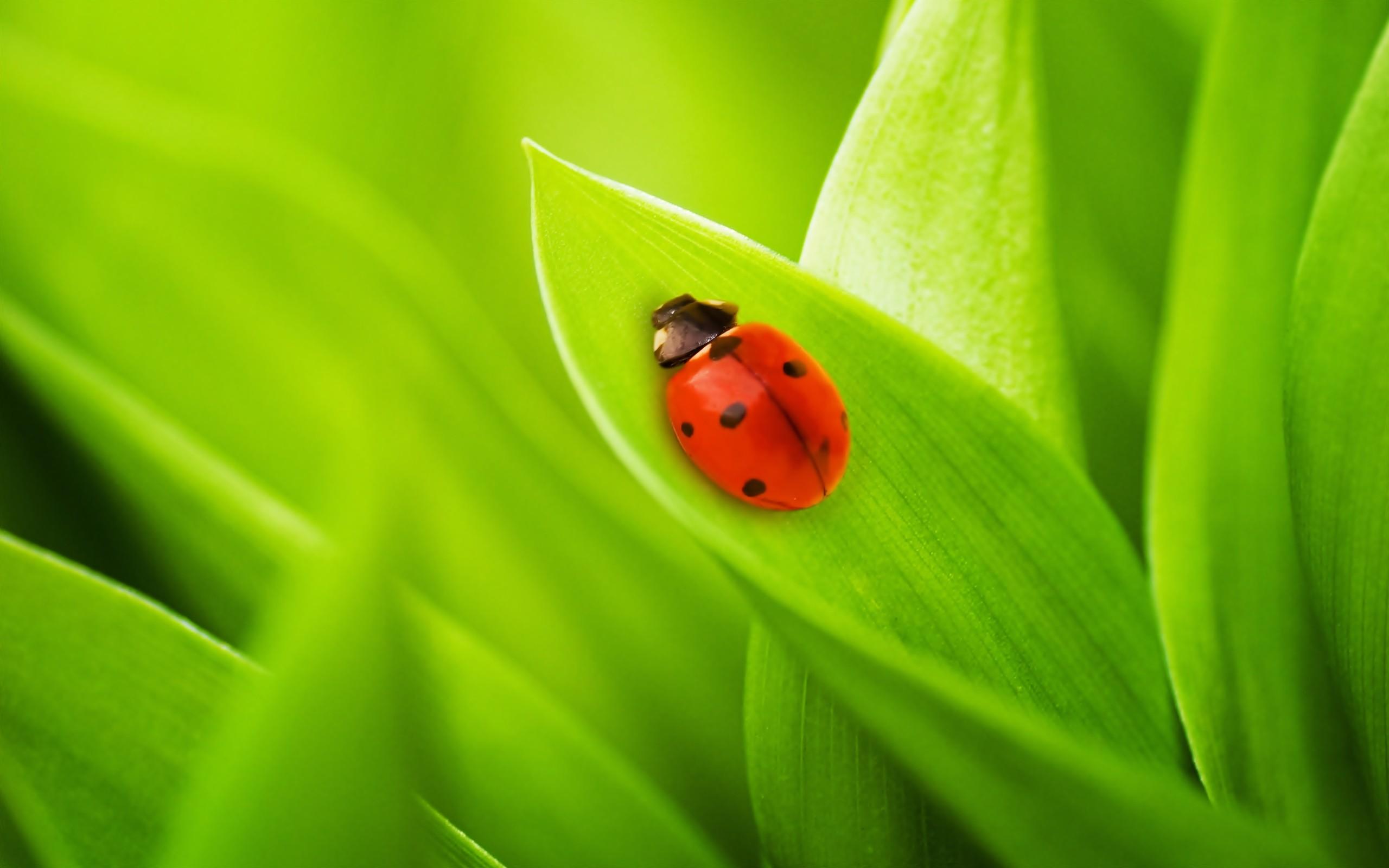 Ảnh thiên nhiên côn trùng đẹp