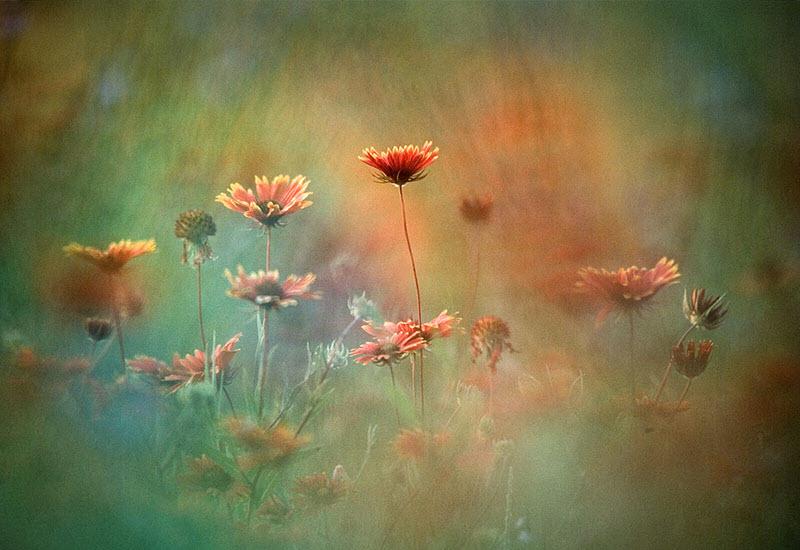 Ảnh thiên nhiên loài hoa đẹp