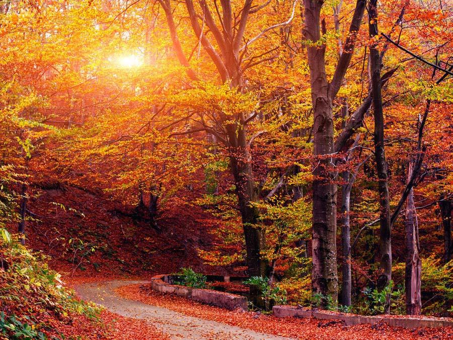Ảnh phong cảnh mùa thu đẹp