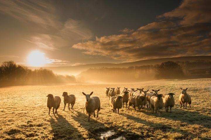 Hình ảnh phong cảnh và loài vật
