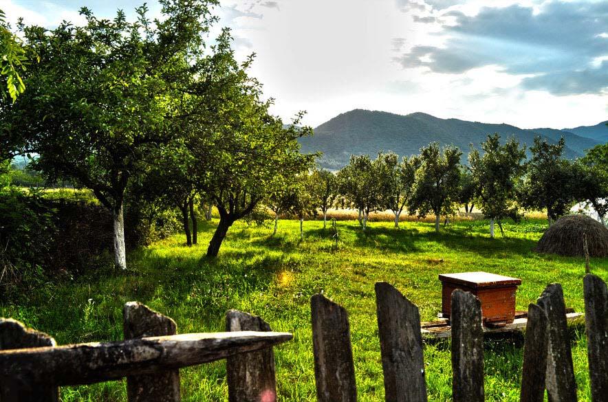Hình ảnh phong cảnh vườn quê đẹp