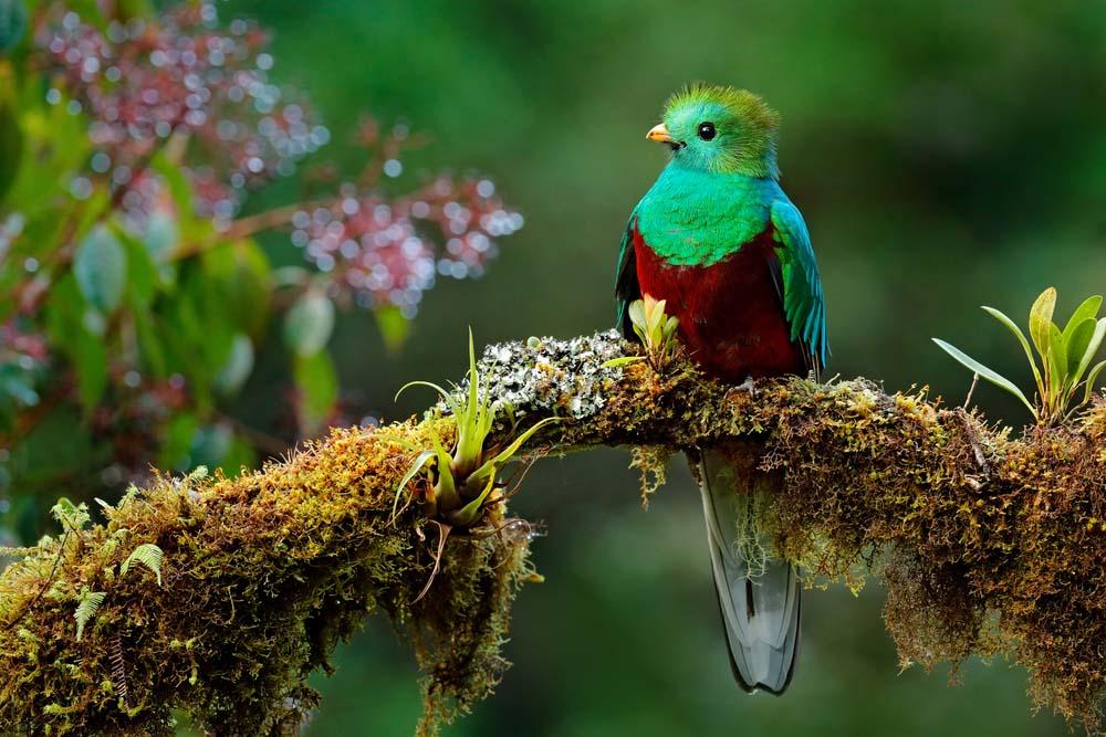 Ảnh thiên nhiên loài chim đẹp nhất thế giới