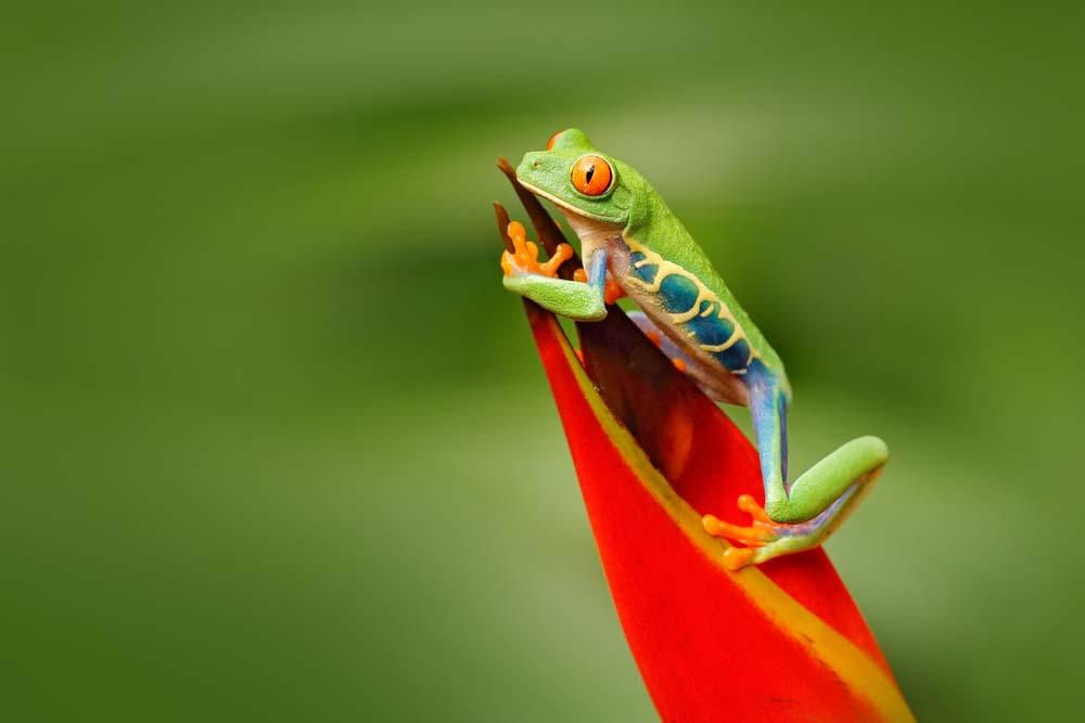 Ảnh thiên nhiên loài ếch đẹp nhất thế giới