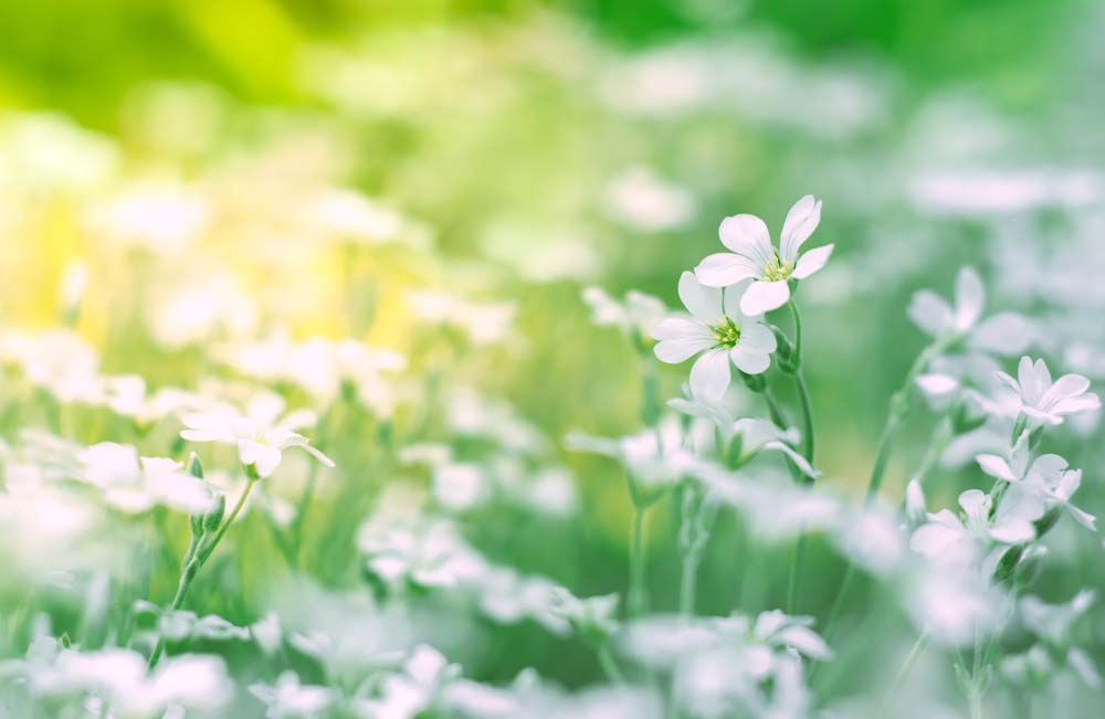 Hình ảnh hoa trong thiên nhiên đẹp nhất