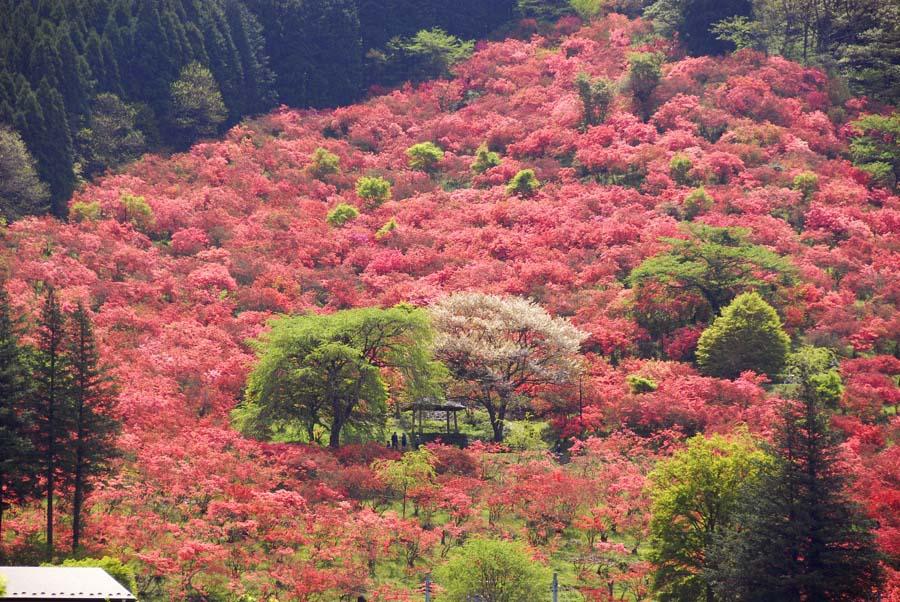 Hình ảnh rừng cây đỏ tự nhiên đẹp nhất