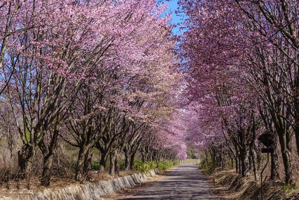 Hình ảnh rùng cây tự nhiên đẹp nhất thế giới