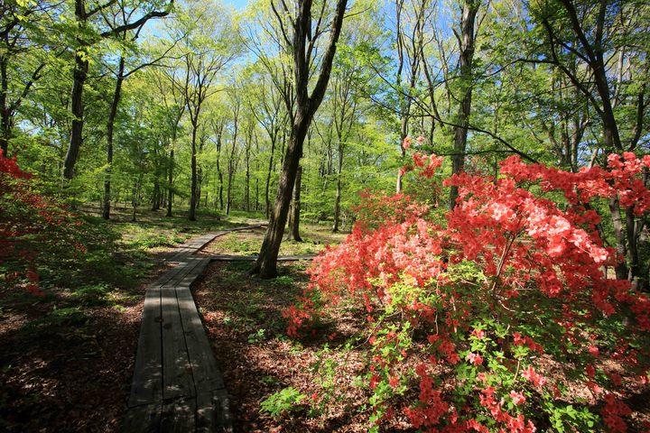 Hình ảnh rừng thiên nhiên đẹp nhất