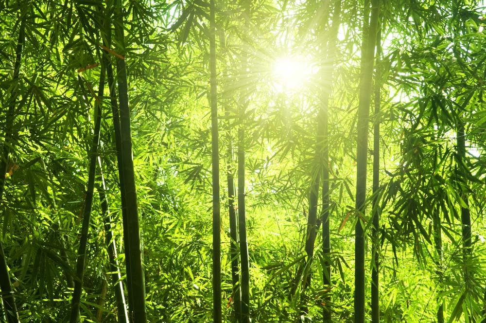 Hình ảnh rừng tre thiên nhiên đẹp nhất