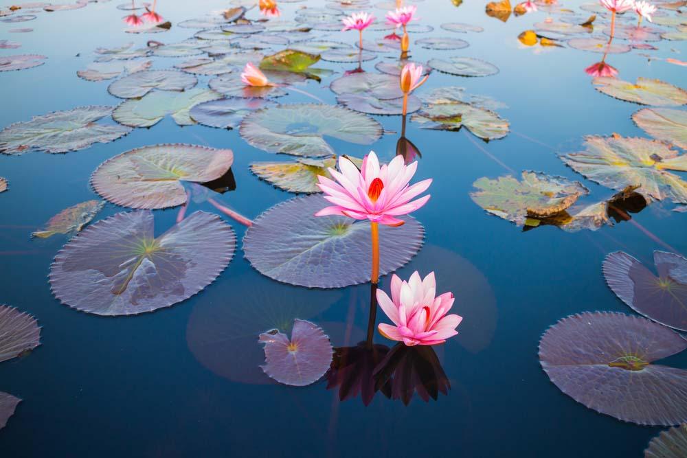 Hình ảnh thiên nhiên hoa đẹp nhất thế giới