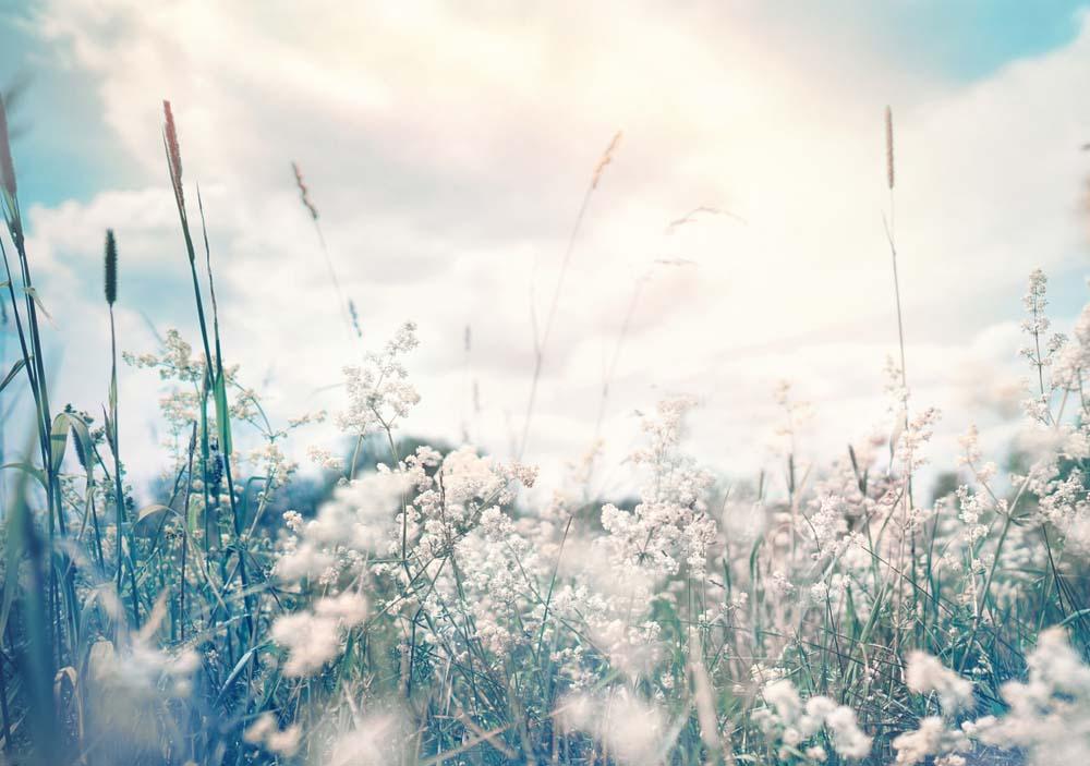 Hình ảnh thiên nhiên hoa trắng đẹp nhất