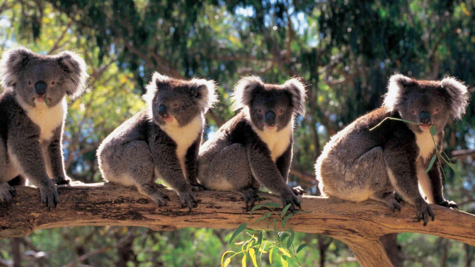 Hình ảnh thiên nhiên loài vật đẹp nhất thế giới