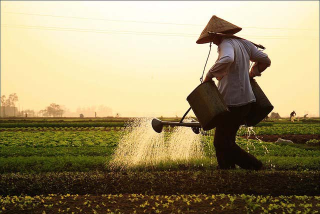 Ảnh đẹp con người Việt Nam trong cuộc sống