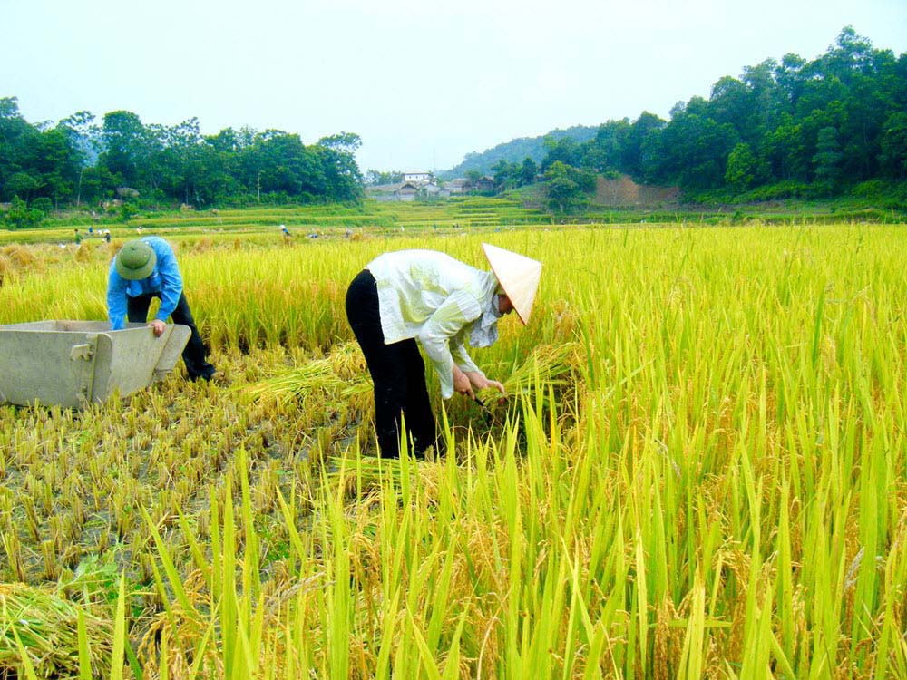 Ảnh đẹp cuộc sống con người Việt Nam