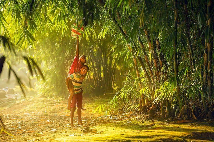 Hình ảnh đẹp cây tre Việt Nam