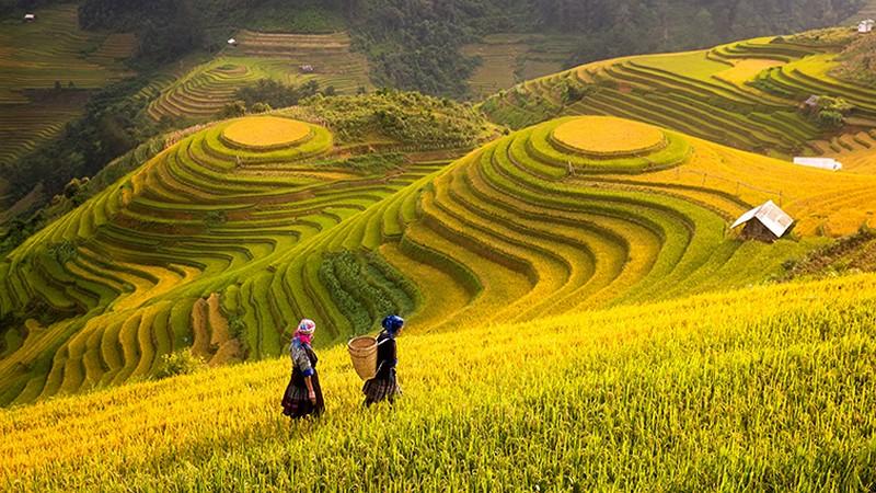 Hình ảnh Việt Nam tươi đẹp