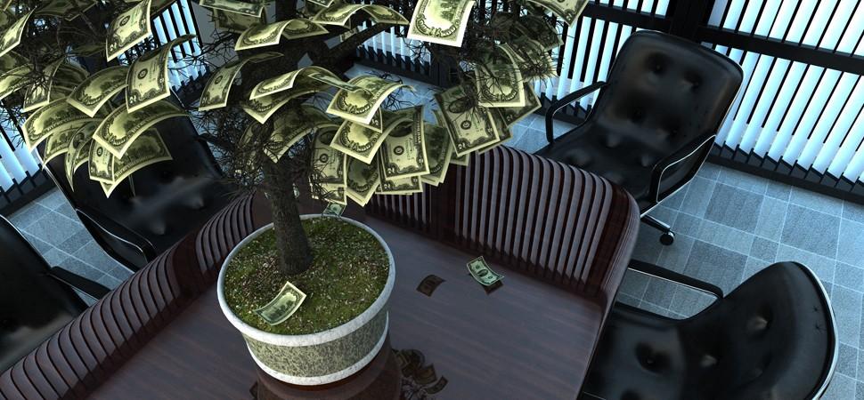 Hình ảnh cây tiền đẹp nhất