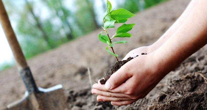 Ảnh đẹp trồng cây bảo vệ môi trường xanh