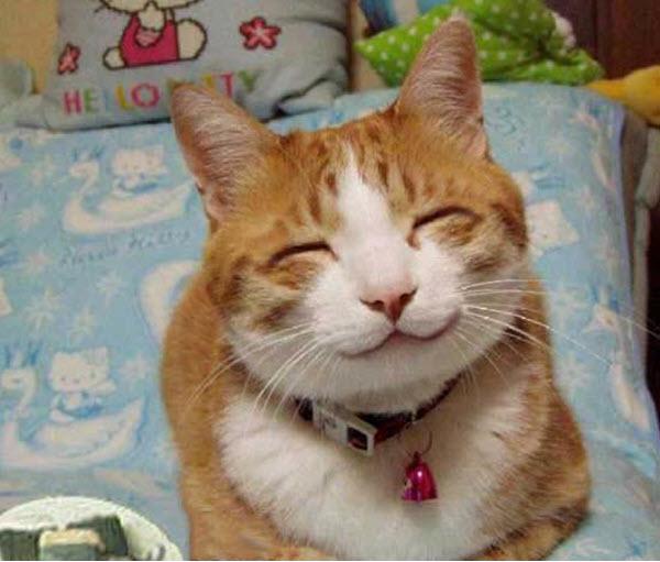 Ảnh mèo vui nhộn
