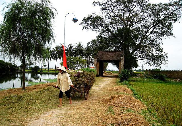 Hình ảnh làng quê Việt Nam vào mùa gặt lúa