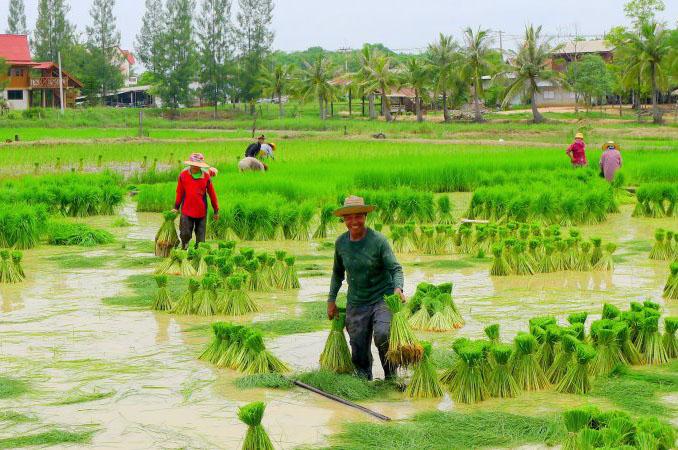 Hình ảnh quê hương Việt nam trong những ngày mùa