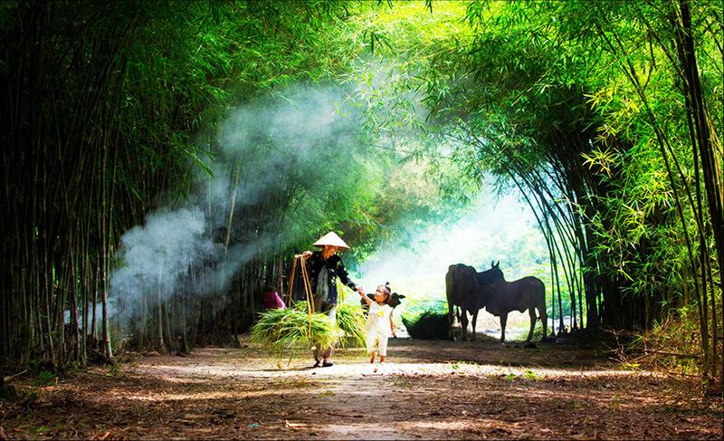 Hình ảnh quê hương Việt nam tuổi thơ của mỗi người