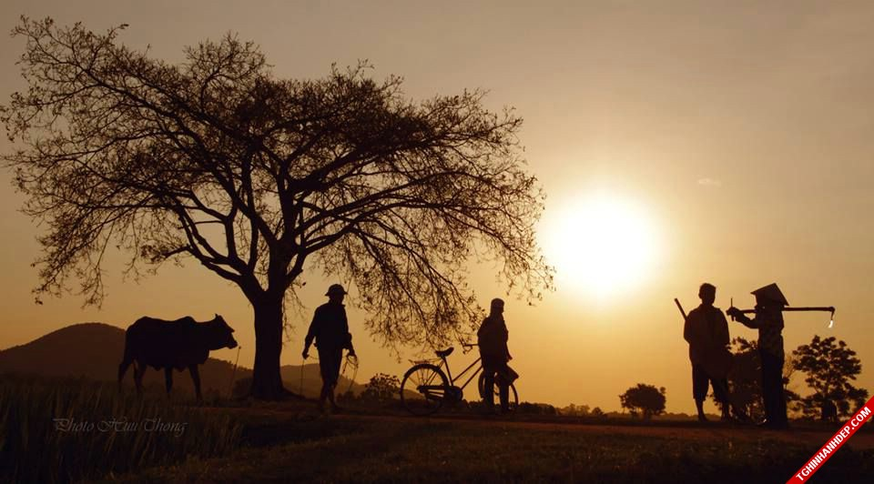 Hình ảnh sáng sơm tinh mơ ở quê hương Việt Nam
