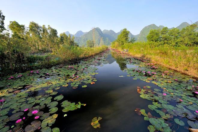 Hoa súng chùa hương quê hương Việt nam đẹp và ấn tượng nhất