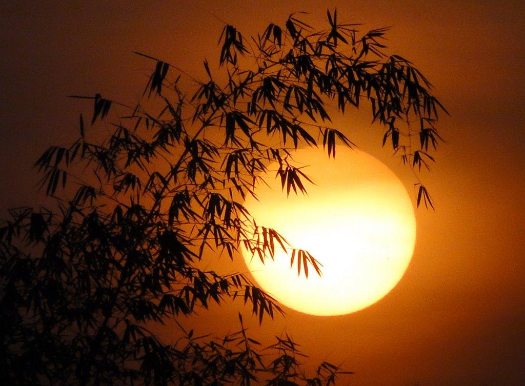Một buổi sáng sớm của quê hương Việt nam đẹp nhất