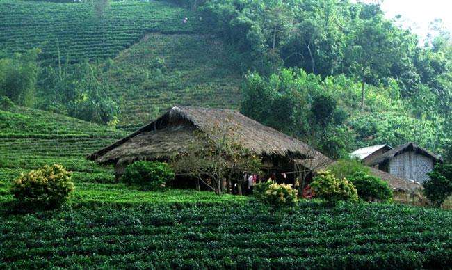 Một góc nhỏ ở quê hương Việt nam