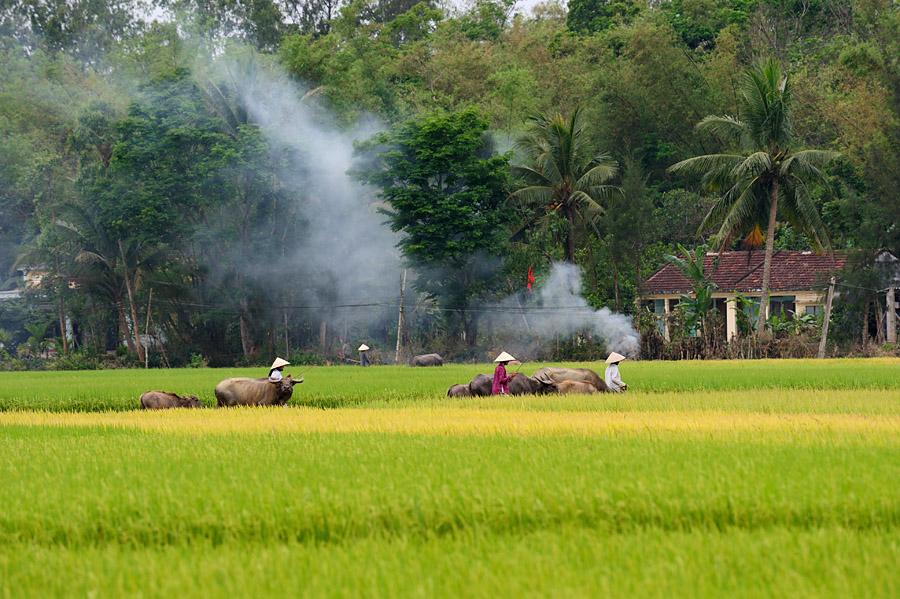 Một góc thanh bình của quê hương Việt Nam