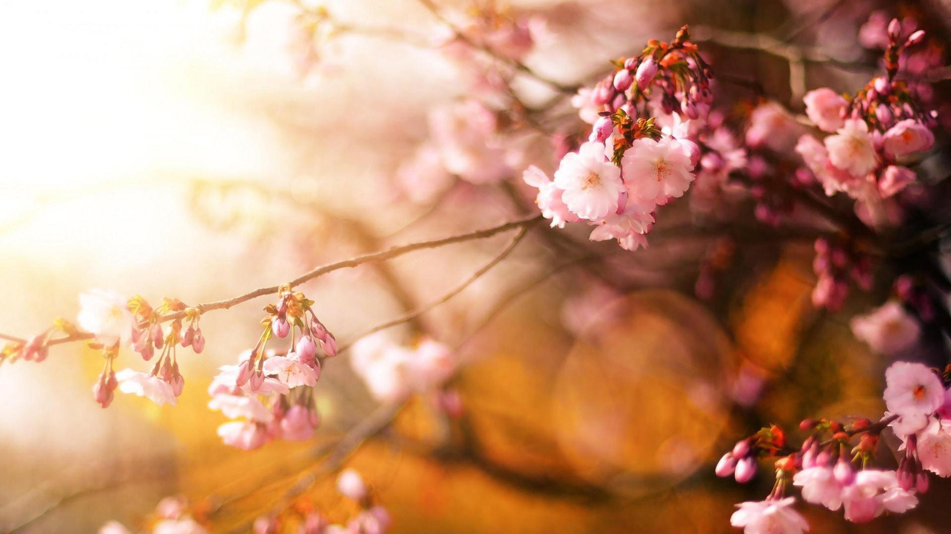 Hinh nền hoa đẹp cho desktop