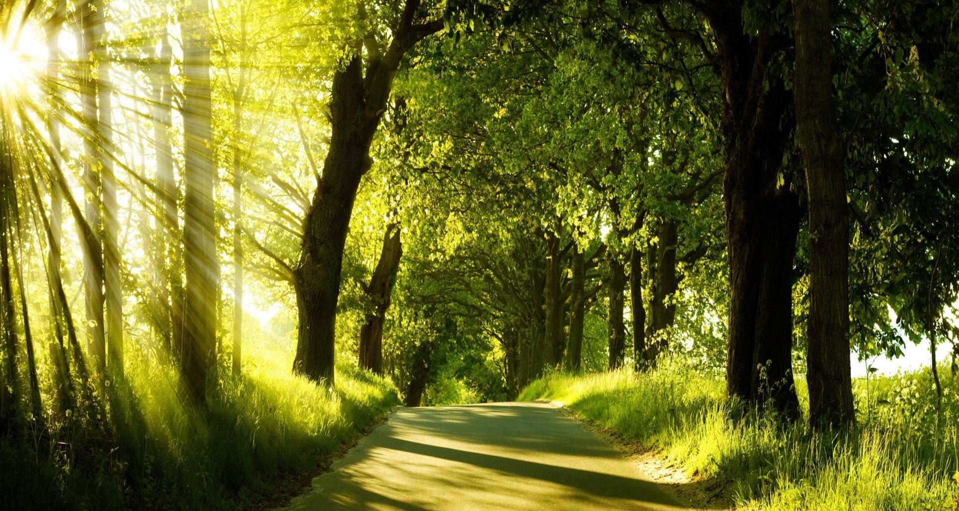 Beautiful path nature wallpaper hd