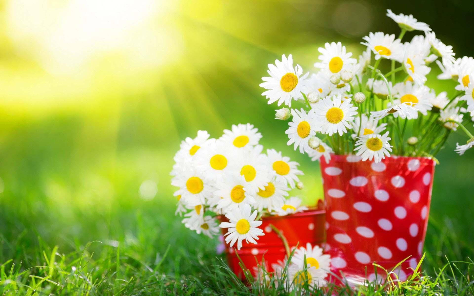 Cute flower wallpaper HD