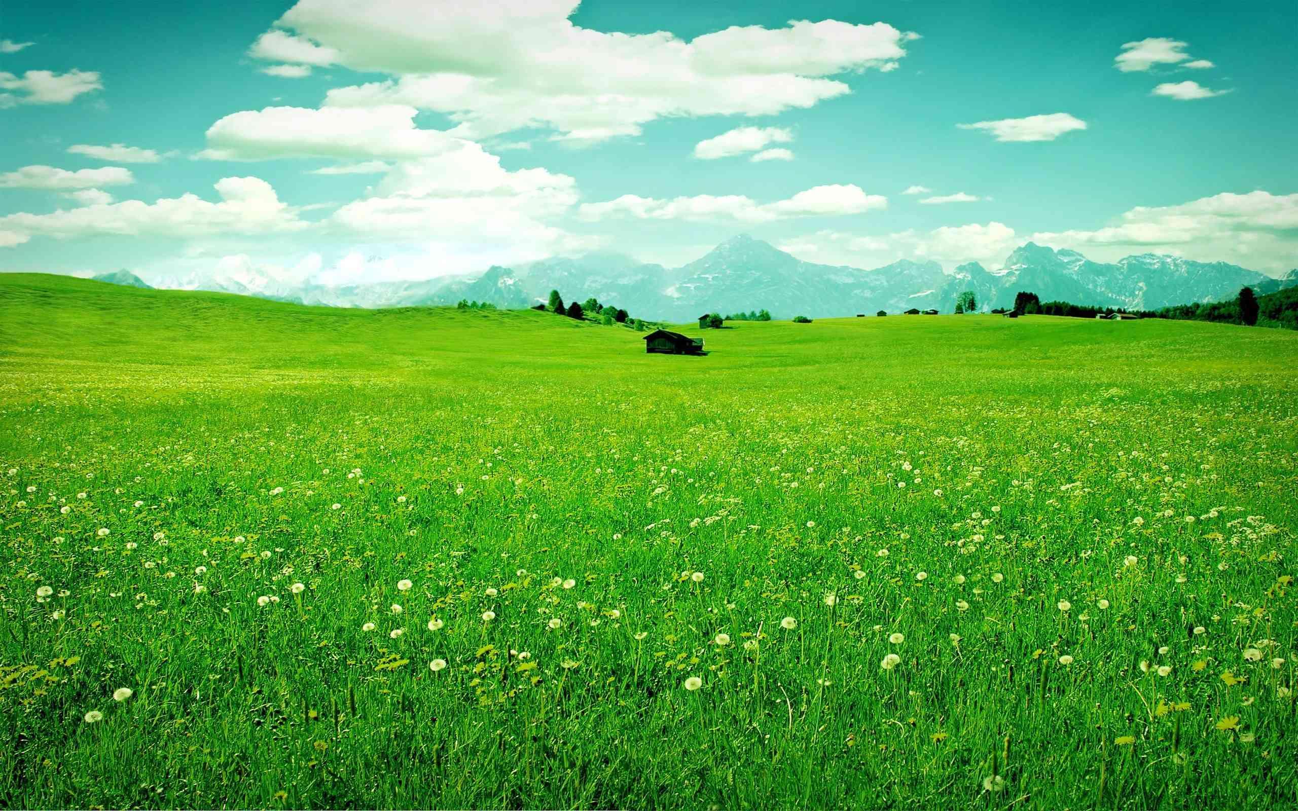 Grass nature wallpaper