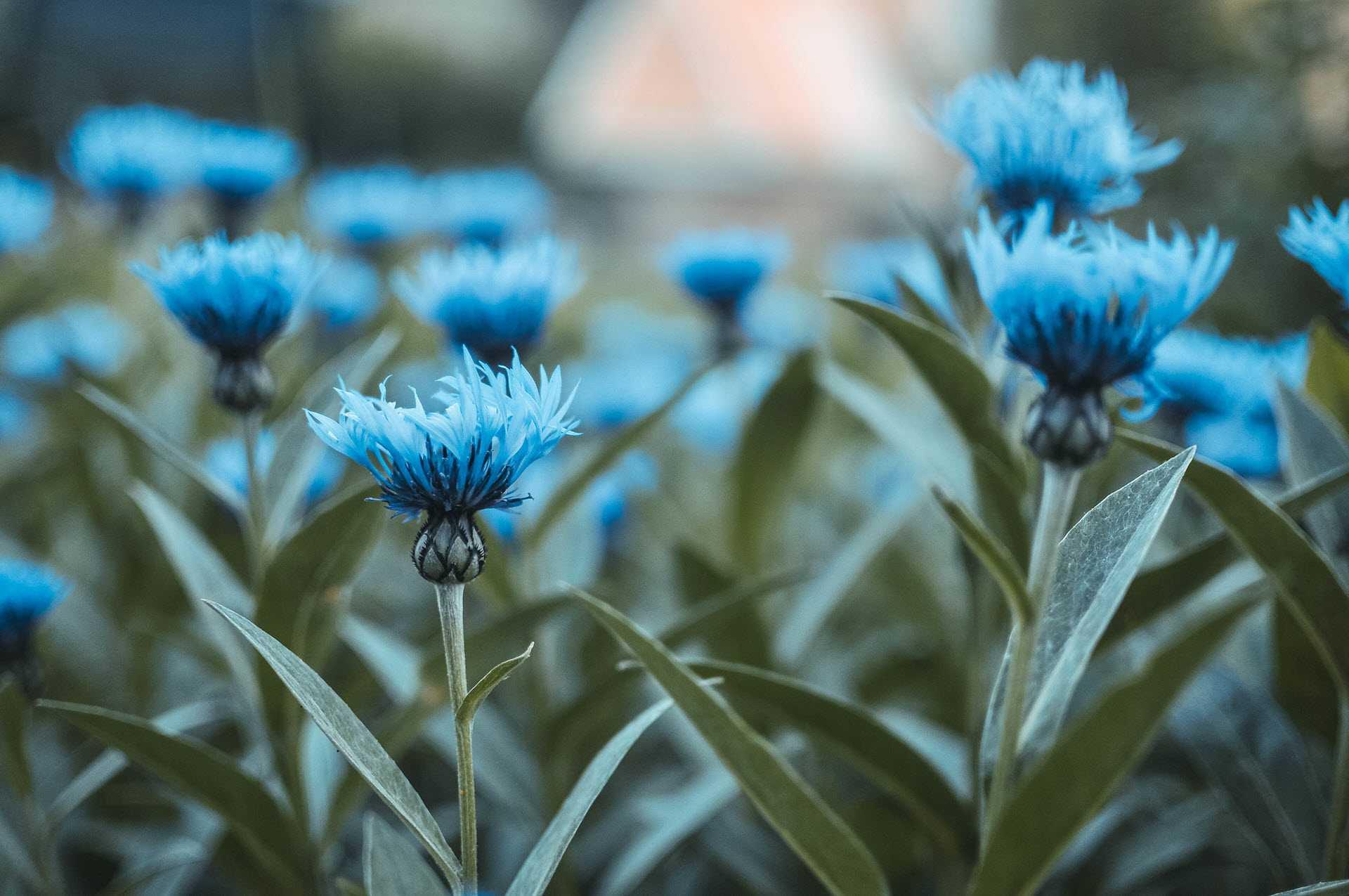 HD wallpaper flower