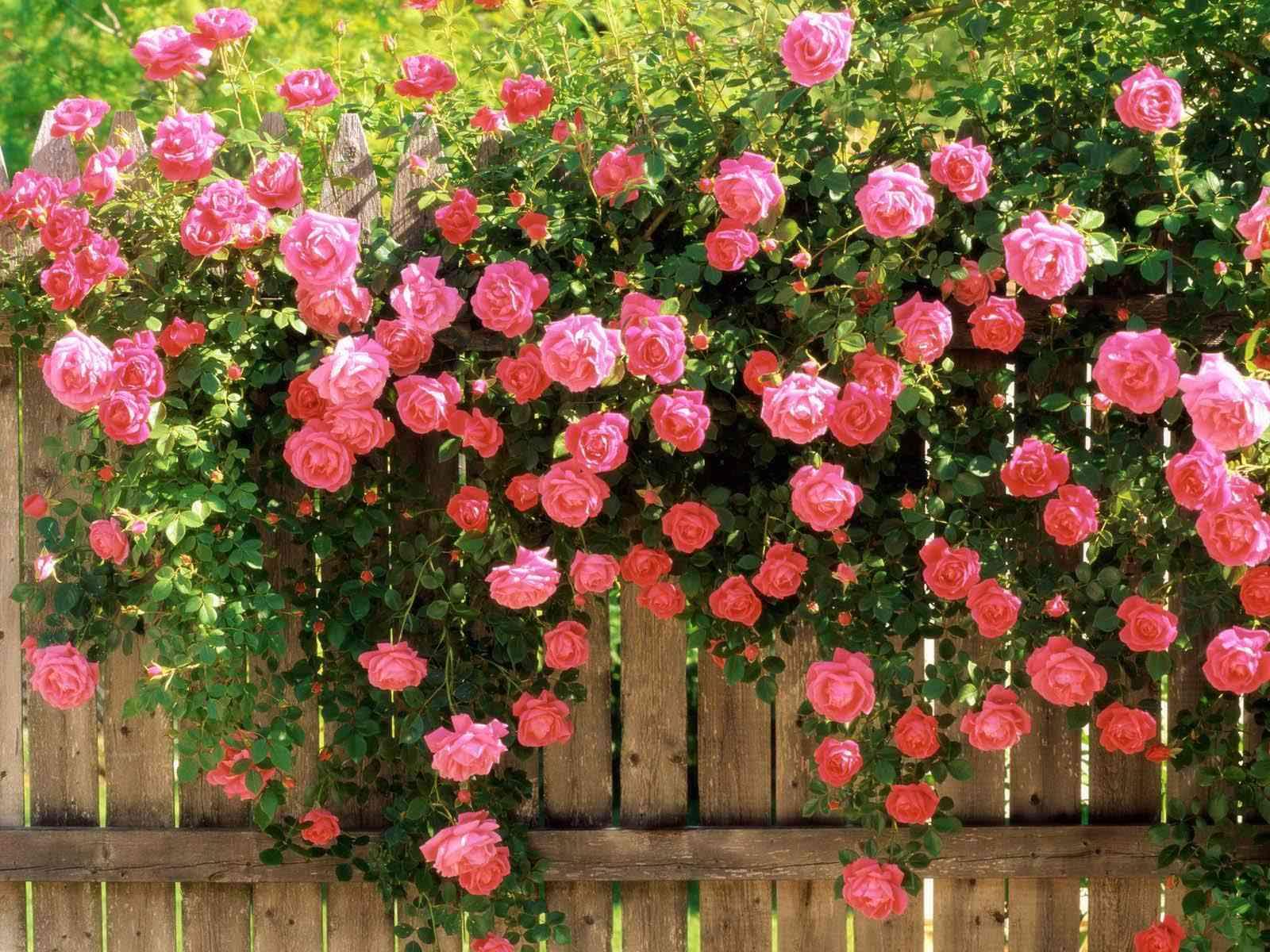 Nice flower wallpaper
