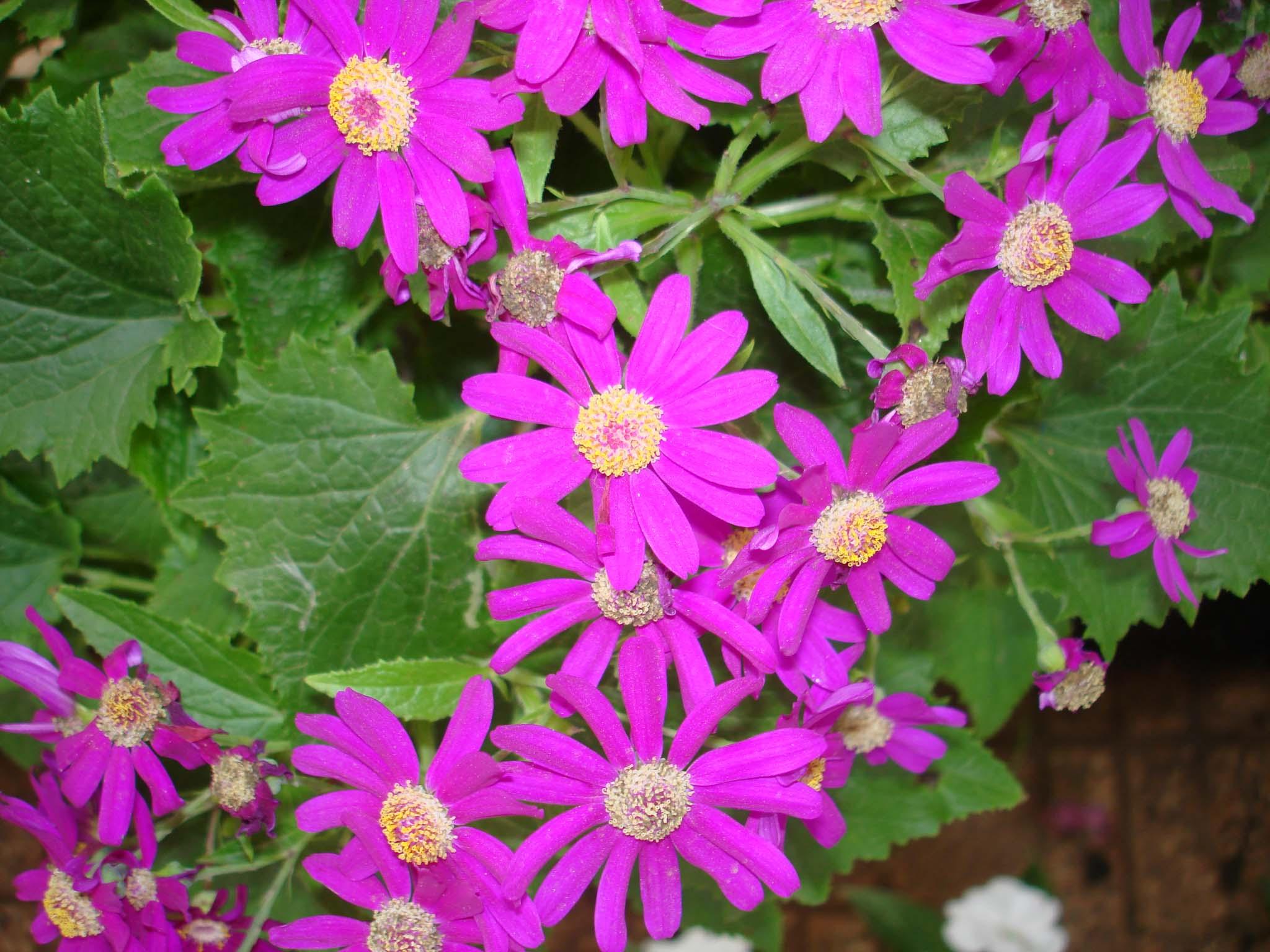 Purple flower wallpaper