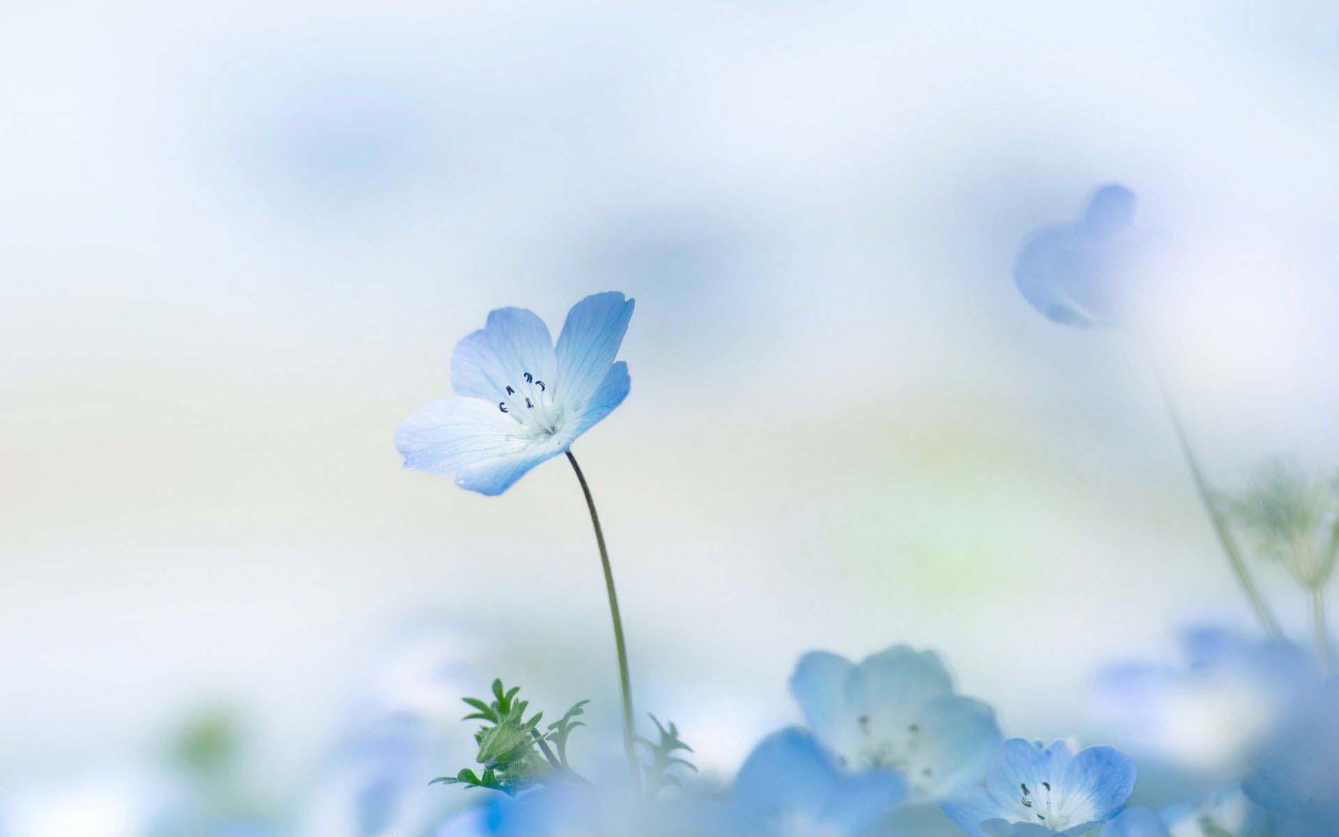 Wallpaper hd flower