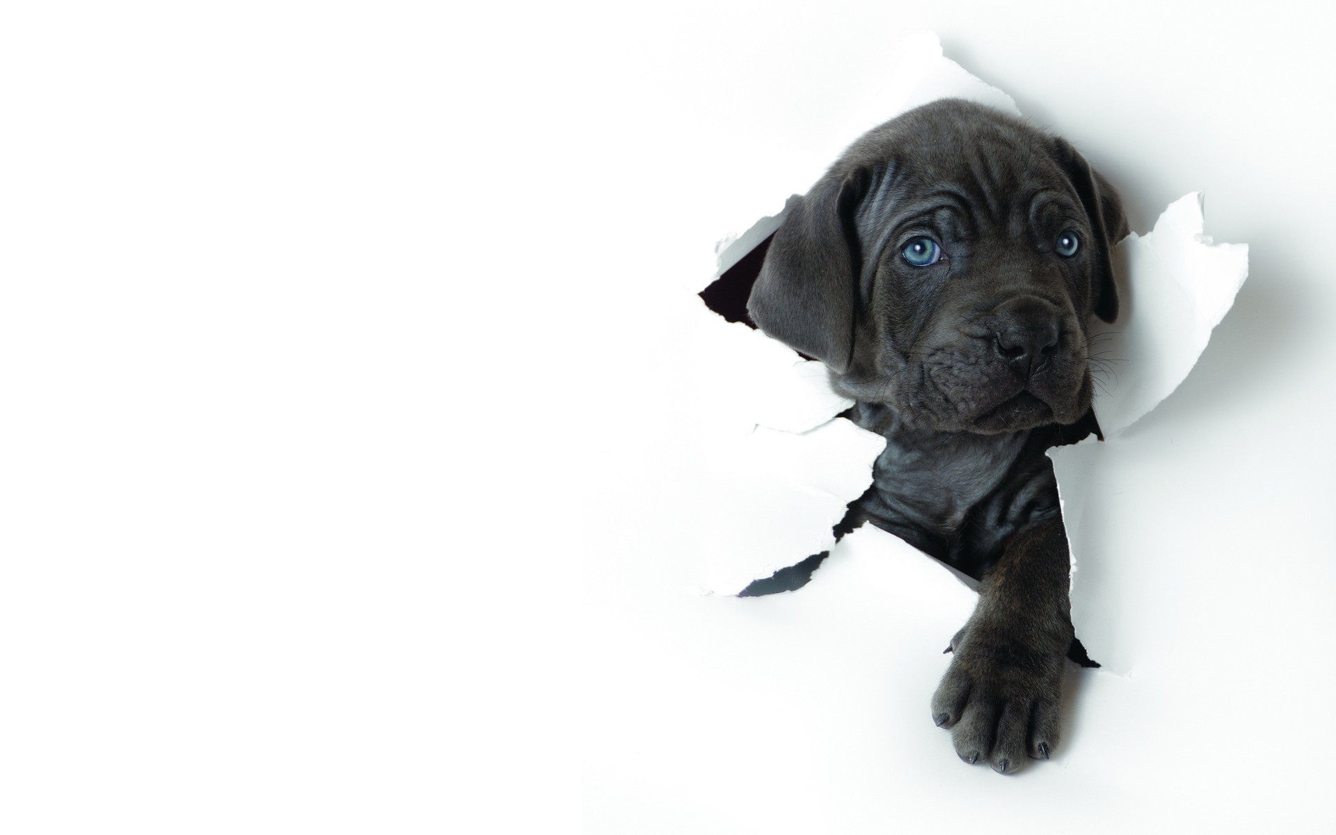Black dog and white wallpaper