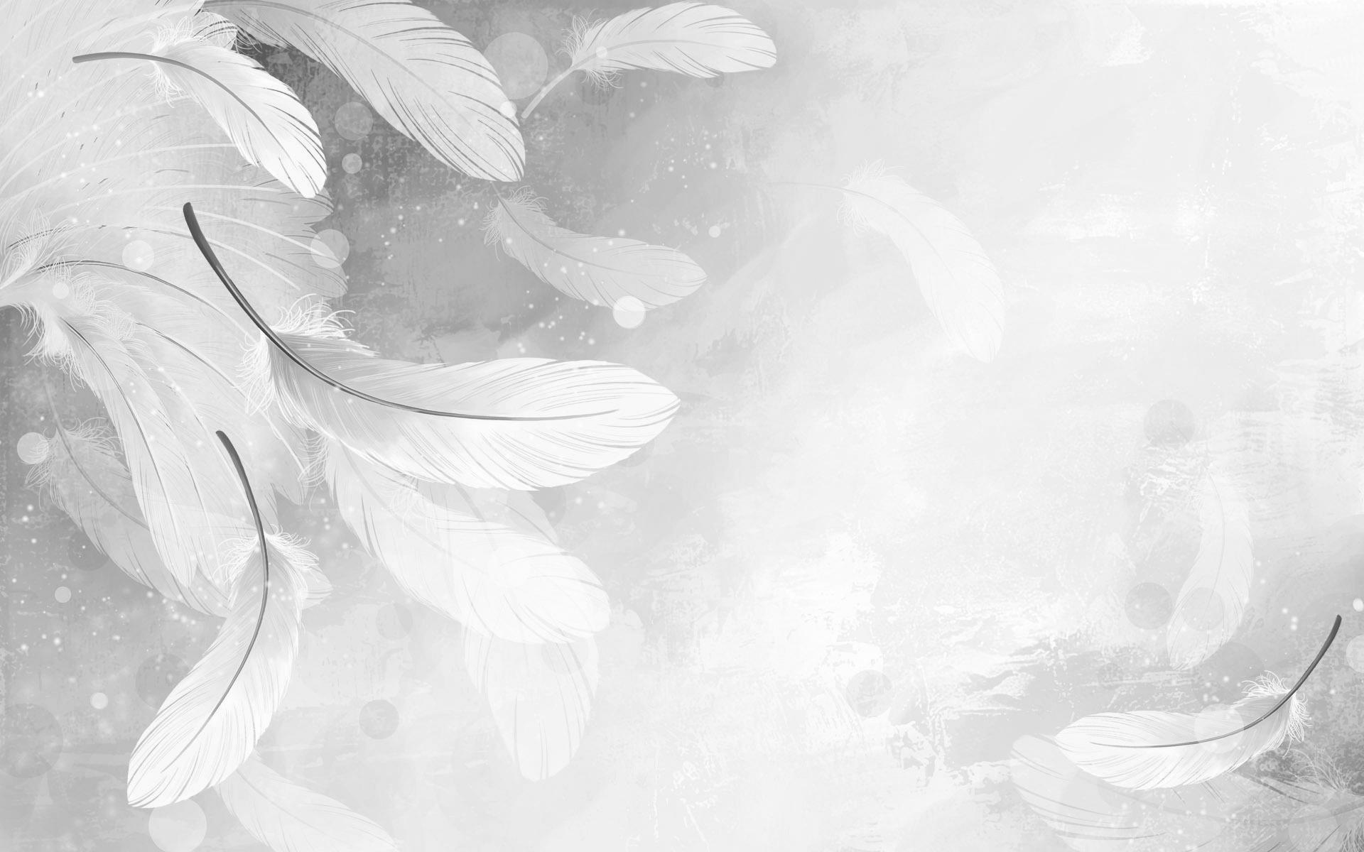 Feather white wallpaper