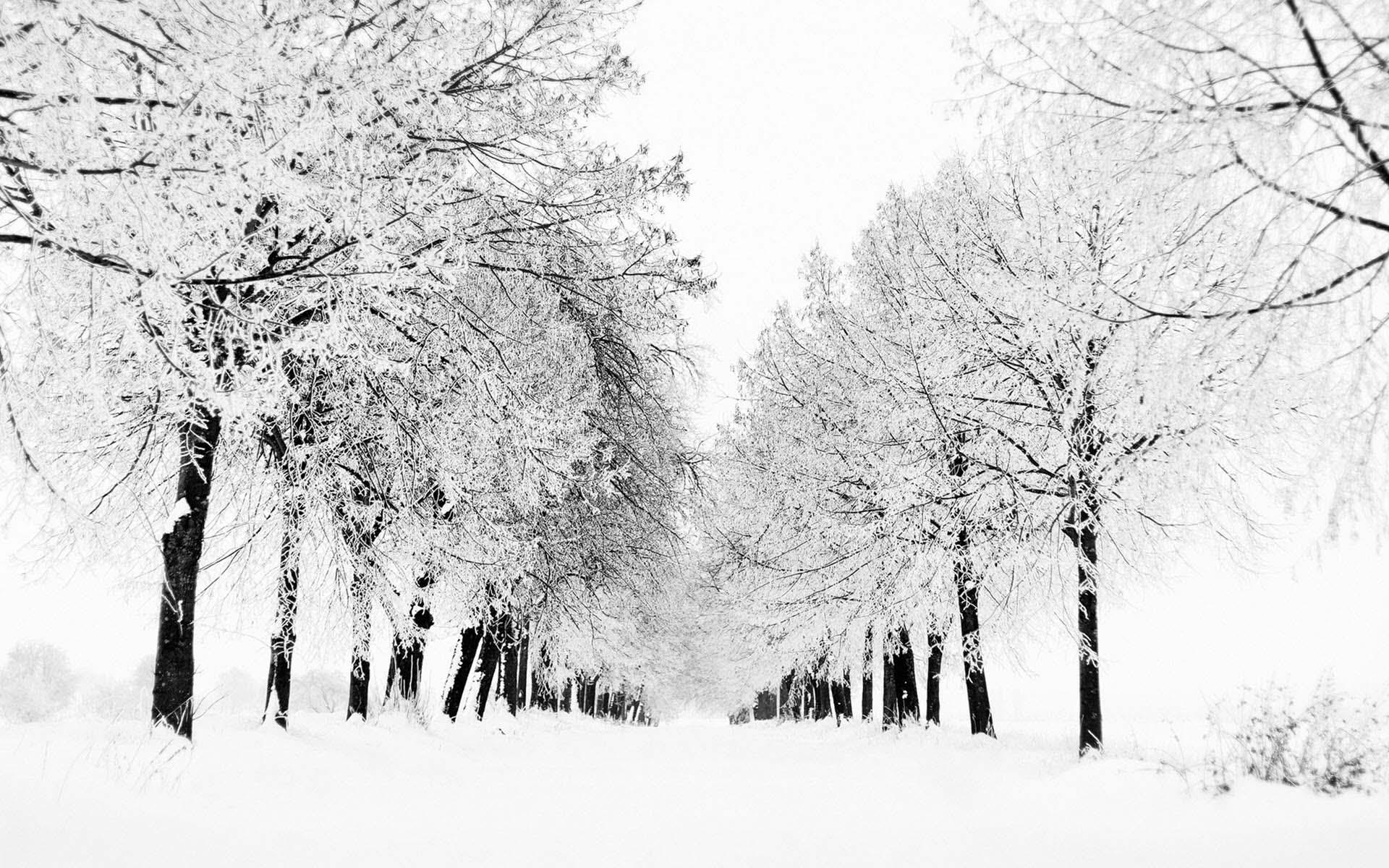 White snow wallpaper
